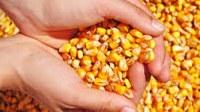 Instalada a CPI para investigar distribuição de milho